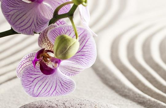 Close up of zen lilac orchid flowers with green stems on rippling sand
